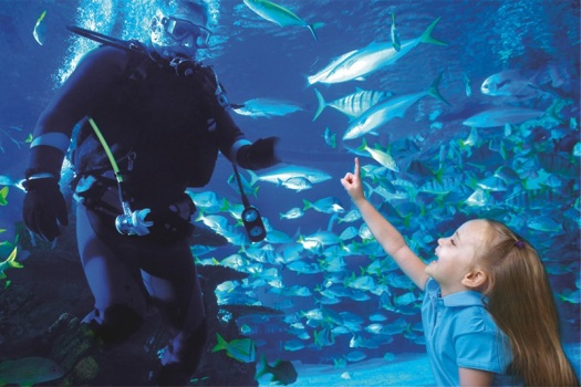 houston-citypass-downtown-aquarium-girl-with-diver