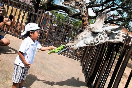 houston-citypass-zoo-boy-with-giraffe